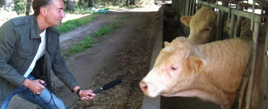 Und die Kuh sagt Muh!